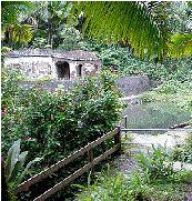 6 ba o de oro trail discovering puerto rico for Bano de oro el yunque