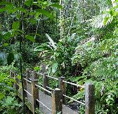 Big Tree Trail in El Yunque Rainforest Puerto Rico