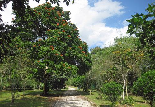 caguas botanical gardens