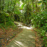 El Yunque in Pictures