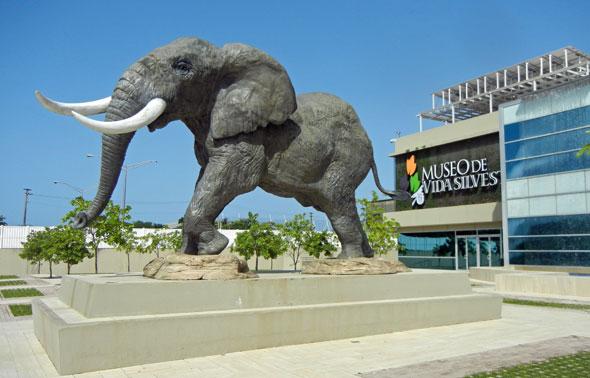 Museo de vida silvestre san juan puerto rico turismo for Turismo interno p r
