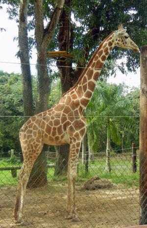 mayaguez Zoo Puerto Rico